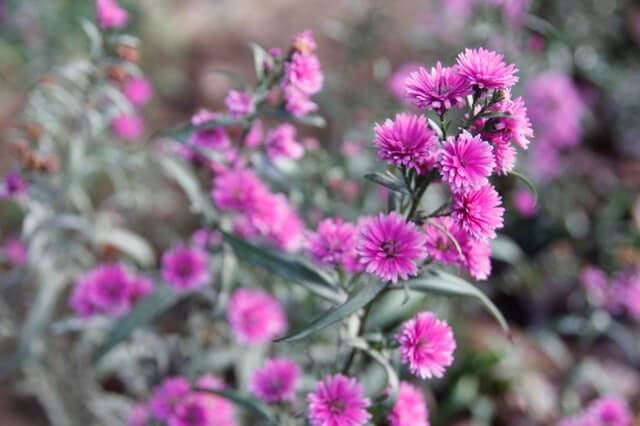 Pink Flowers HD Copyright Free Image