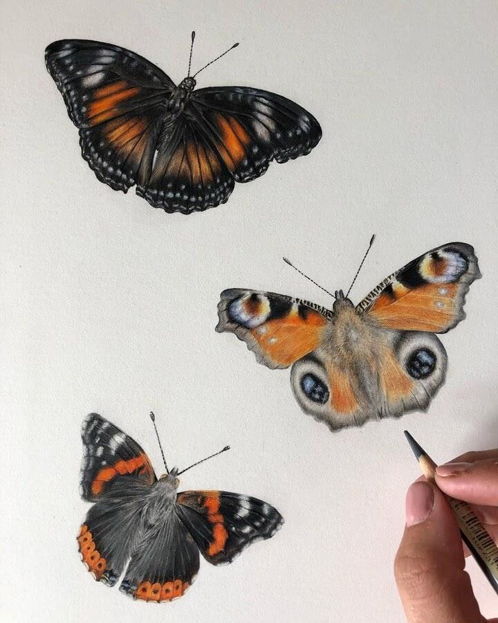 09-Butterflies-Bethany-Vere-www-designstack-co