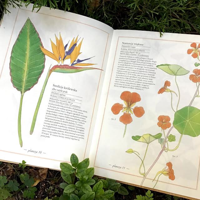 """""""Inwentarz kwiatów"""" Virginie Aladjidi, Emmanuelle Tchoukriel, Zakamarki, albumy przyrodnicze dla dzieci i dorosłych, dla każdego"""