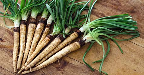 Salsify Root Vegetable Benefits And Nutrition Salsify root is a root vegetable that grown in many regions throughout the world with numerous health benefits and nutrition. It is also known as the oyster plant. Due to various types of vitamins, minerals, and nutrients in salsify root, this vegetable has some health benefits such as lower blood pressure, boost immune system, improve bone health, and etc. This root looks like a skinny parsnip with oyster-flavored. It has large, broad leaves above ground and a long, tapered, black root. The fleshy content of the root is the edible portion. It is believed that this saltwater root vegetable native to the Southern Europe and the Middle East, but its actual origin is believed to be in Spain.    Salsify Root Vegetable Benefits Salsify root vegetable contains lots of Vitamin, Minerals, and other components. Some of the vitamins are Vitamin C, Riboflavin, Thiamin, Folate, Niacin, Pyridoxine, Pantothenic acid, and Choline. The minerals are such as calcium, magnesium, iron, protein, zinc, copper and selenium. It also contains iron, potassium, calcium, manganese, phosphorous, magnesium, and copper. The best part is zero cholesterol. Improve Bone Health and Strength We know that calcium is the most important mineral for bone. Salsify is highly rich in calcium which is very good for our bone health. The high levels minerals like magnesium, phosphorous, copper, iron, and manganese are for developing bone tissue. Therefore, the content also can prevent us from various types of bone related issues such as osteoporosis and even arthritis. Boost Immune System The high amount of Vitamin C and folates in it improves metabolic efficiency and functionality throughout the body and also helps the immune system. Vitamin C stimulates white blood cells and vitamin A functions as an antioxidant will protect our immune system from oxidative damage caused by free radicals. Hair Health So far, salsify root has been stimulated the re-growth of hair. 