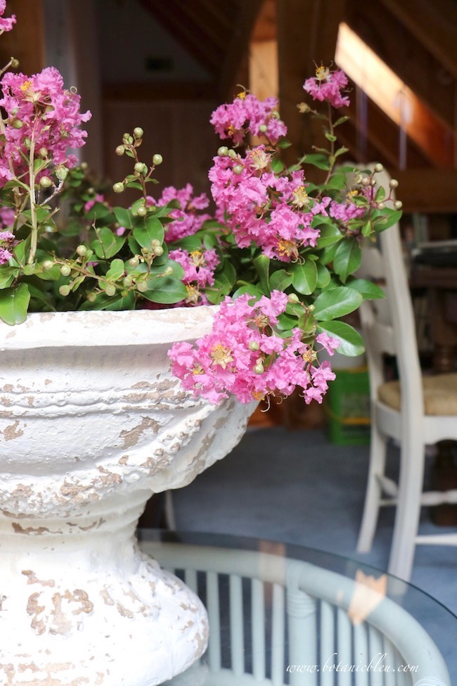 Directions for French Country white urn filled with pink crepe myrtle blooms
