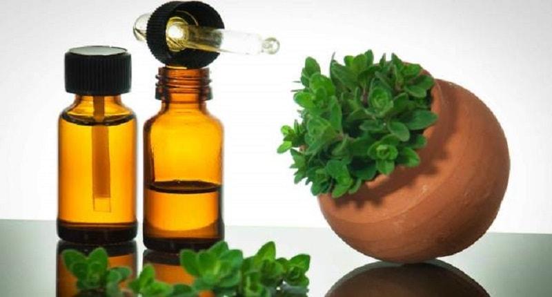 Os incríveis benefícios do óleo de orégano para a saúde geral