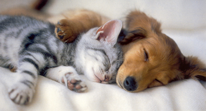 Pictures Of Puppies And Kittens Playing - Pictures Of ...