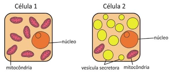 Analise os esquemas simplificados das células 1 e 2