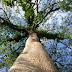 Pohon Setan, Identitas Ngaco Yang Disematkan pada Tanaman Kaya Manfaat untuk Kehidupan Manusia