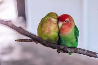 haiku, natur, Zusammenhalt, vögel, kälte, die welt, feindseligkeit, wärme, silberstunden blog,