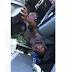 Veja com exclusividade motorista preso às ferragens em acidente entre Conceição com a divisa do Ceará