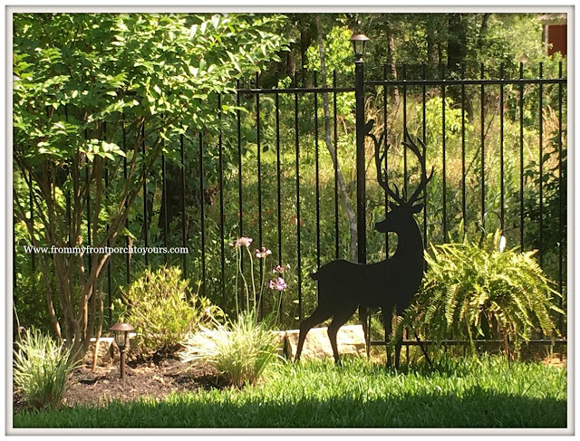 Suburban Farmhouse Backyard-Deer-Nature Reserve- From My Front Porch To Yours