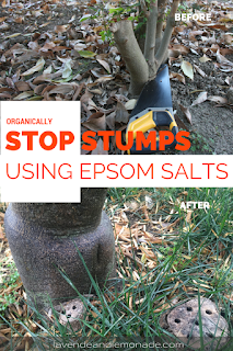 Organically stop stumps from growing back with this simple tip!