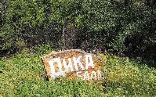 Юрьевка. Балка Дика