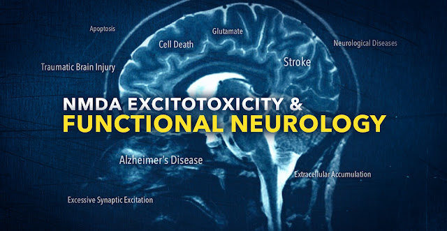 NMDA Excitotoxicity in Functional Neurology | El Paso, TX Chiropractor