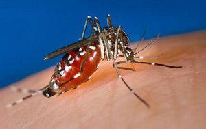 6 Cara Mencegah Gigitan Nyamuk Demam Berdarah