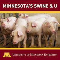 Minnesota's Swine & U podcast icon