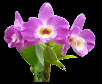 Orquídea lilás png