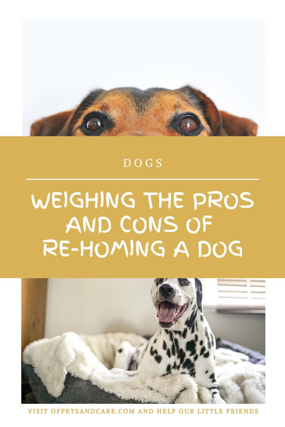 rehoming a dog,