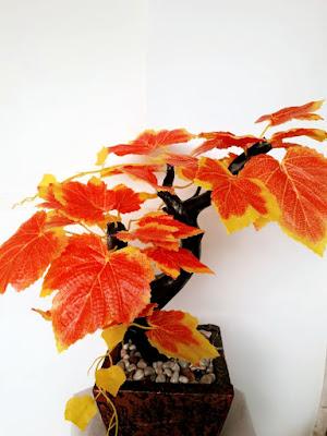 Gambar Pohon Hias Anggur