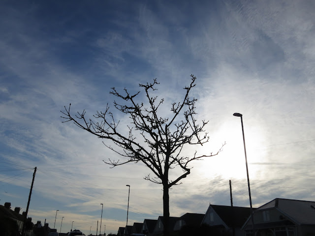 Small urban tree against winter sky - with roofs, lamposts and telegraph poles.