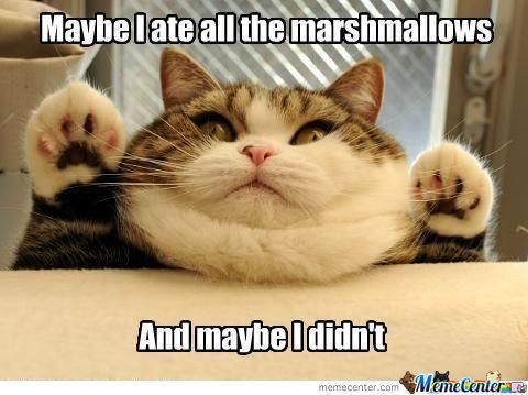 marshmallow cat meme