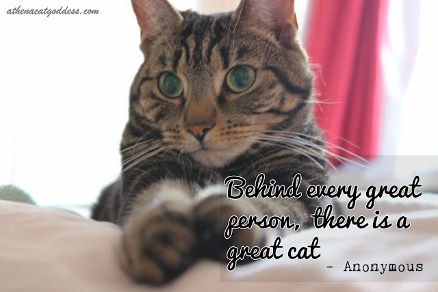 behind every great person there is a great cat