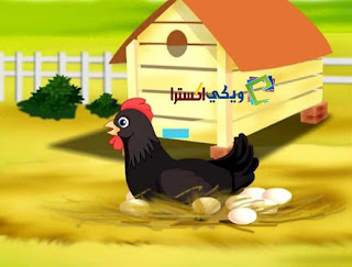 قصة دجاجة هاشم من قصص الاطفال