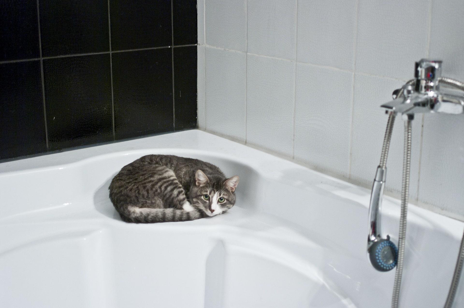 Comment donner un bain à un chat