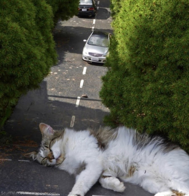 """This Miniature Village Amuses Internet Users with Photos of """"Giant Cats"""""""