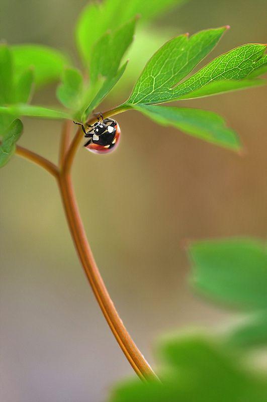 Macro fotos imágenes flores insectos