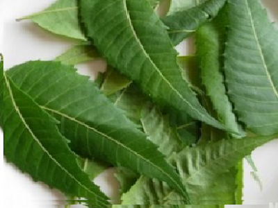 Benefits of Neem for hair, skin and health Removes Dark Circles