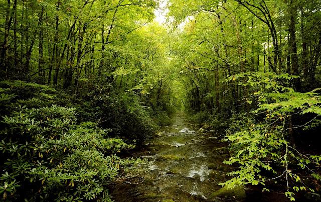 Todo fluye, todo está en movimiento y nada dura eternamente. Por eso no podemos descender dos veces al mismo río pues cuando desciendo al río por segunda vez, ni el río ni yo somos los mismos