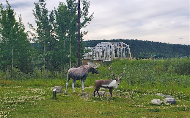 Teslin YT moose and Cariboo by the bridge