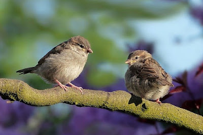 Tree Animals: Animals that live in trees, sparrow