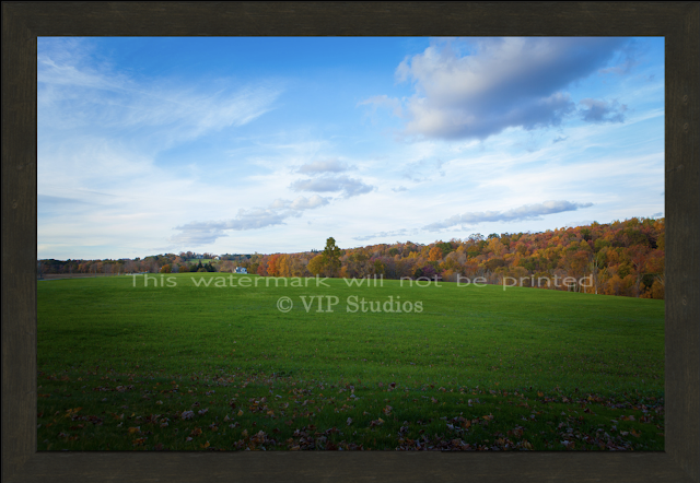 Fall Foliage Print 7961