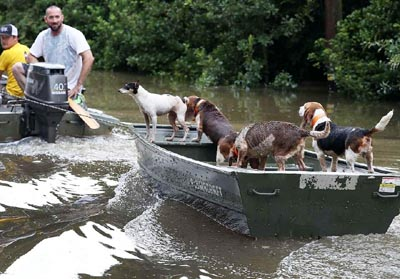 Four legged friends (and enemies): Courageous Rescuers ...