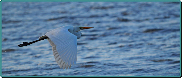 bird in flight
