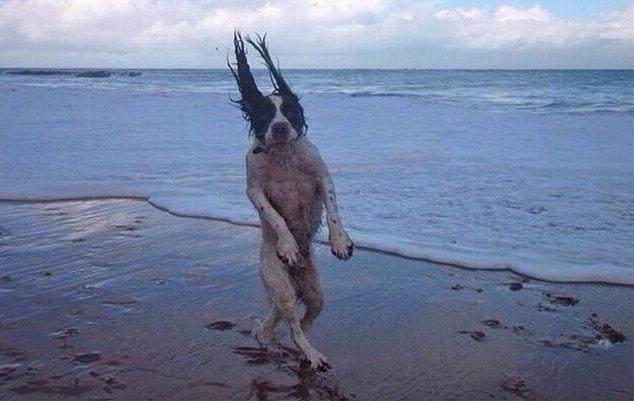 cachorro engraçado