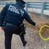 Federales encuentran granada en la autopista Monterrey-Nuevo Laredo