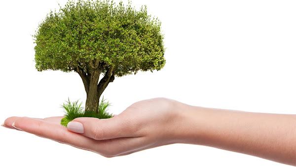 Binance Charity lança projeto NFT para plantar dez milhões de árvores em todo o mundo