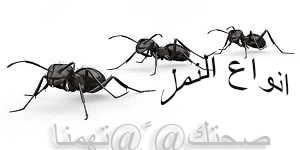 كيف اتخلص من النمل -انواع وصور النمل المنزلى
