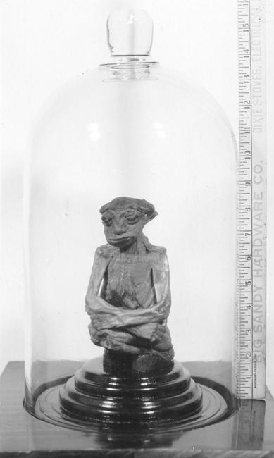 momia%2BPedro2 - Momia confirmaria la existencia de una raza perdida de gente pequeña en Norteamerica