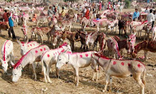 The donkey fair has been organized in Badin