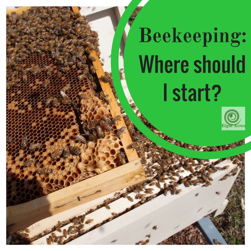 How to raise honey bees how to start beekeeping html autos weblog - Beekeeping beginners small business ...