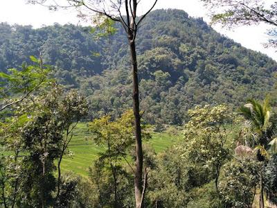 Wisata Pereng Kuning Ambarawa