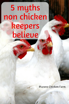 5 myths non chicken keepers believe.