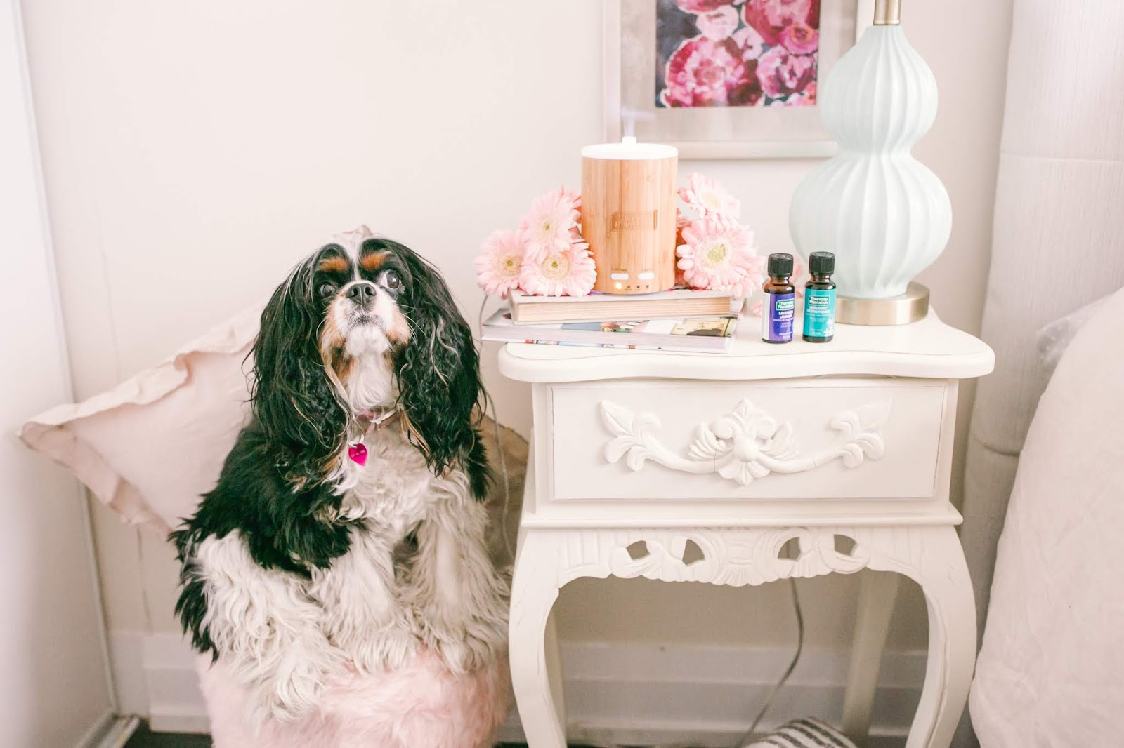 Bijuleni - Why You Need an Essential Oil Diffuser At Home - CAvalier King Charles Spaniel dog at home