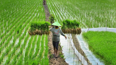 asuransi pertanian gagal panen