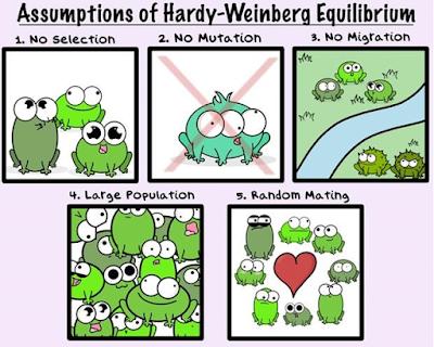 Population Genetics -- Hardy-Weinberg Equilibrium