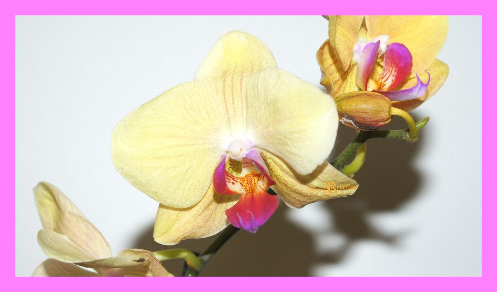 comment choisir une orchid�e ? (pour envisager une relation