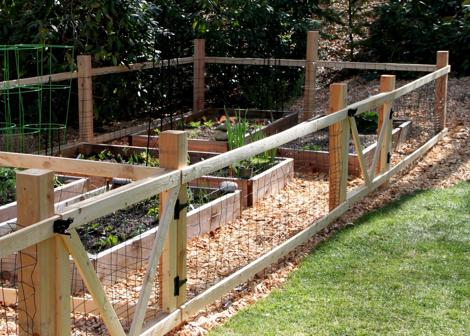 Building garden fence boxes gardening rustic red cedar enlivens a how to build a garden with chicken wire fence subulussalam baanklon Gallery