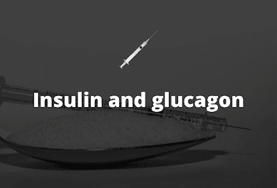 everything about insulin and glucagon (insulin vs glucagon)