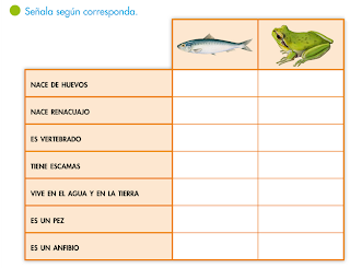 http://primerodecarlos.com/SEGUNDO_PRIMARIA/tengo_todo_4/root_globalizado4/libro/6169/ISBN_9788467808803/activity/U05_179_02_AI/visor.swf